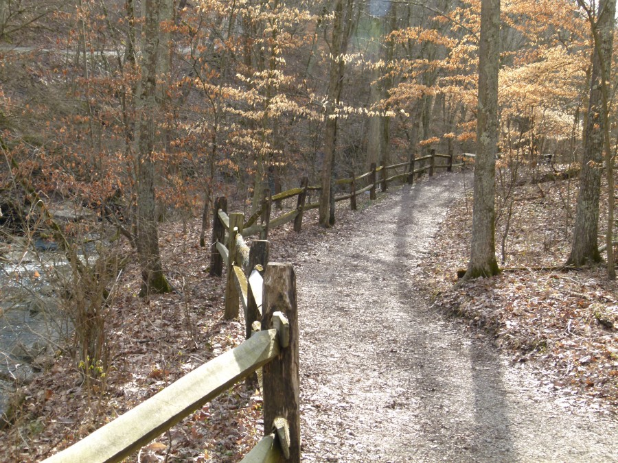 Trail in woods lined with wood fence