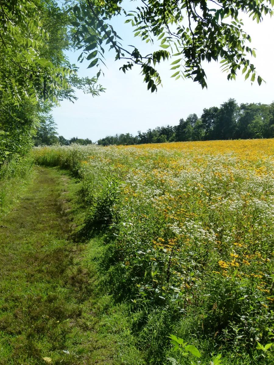 A field line