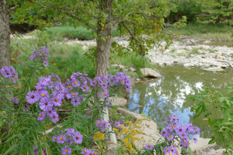 Purple and yellow flowers along with a tree surrounding a pond