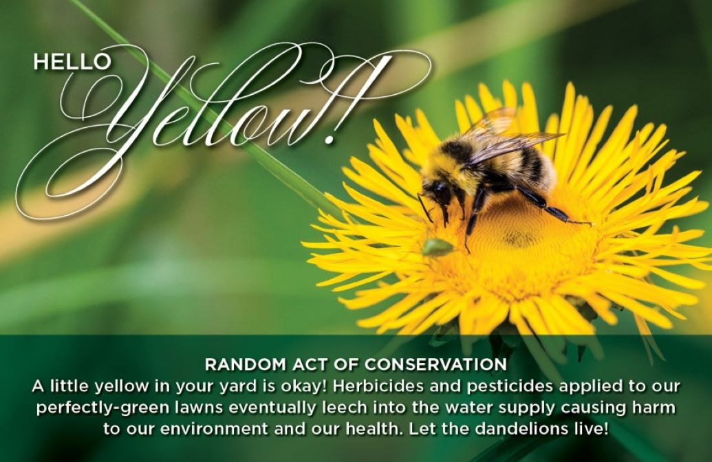 """Random Acts of Conservation """"Hello Yellow"""" Banner of a bee on a yellow flower"""