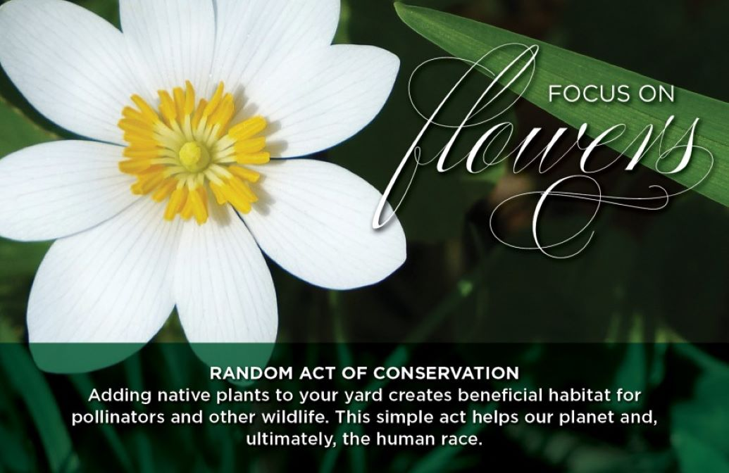 """Random Acts of Conservation """"Focus on Flowers"""" Banner of a white flower"""