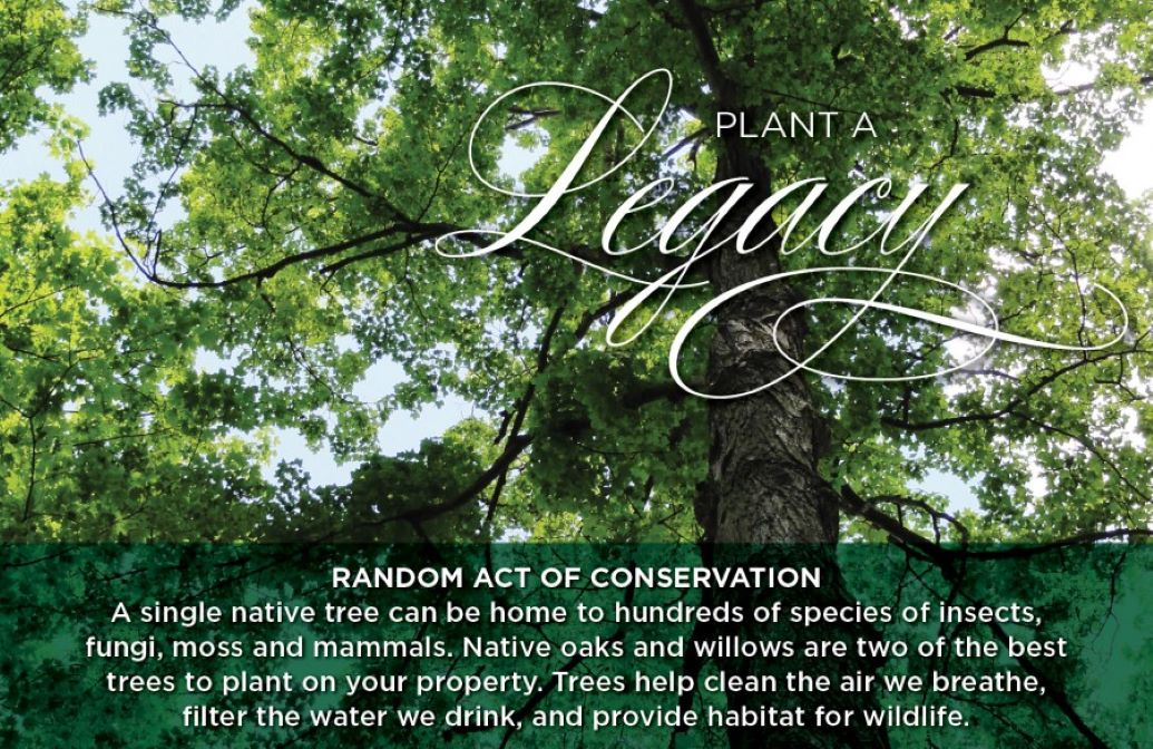"""Random Acts of Conservation """"Plant a Legacy"""" Banner of a tree with green leaves"""