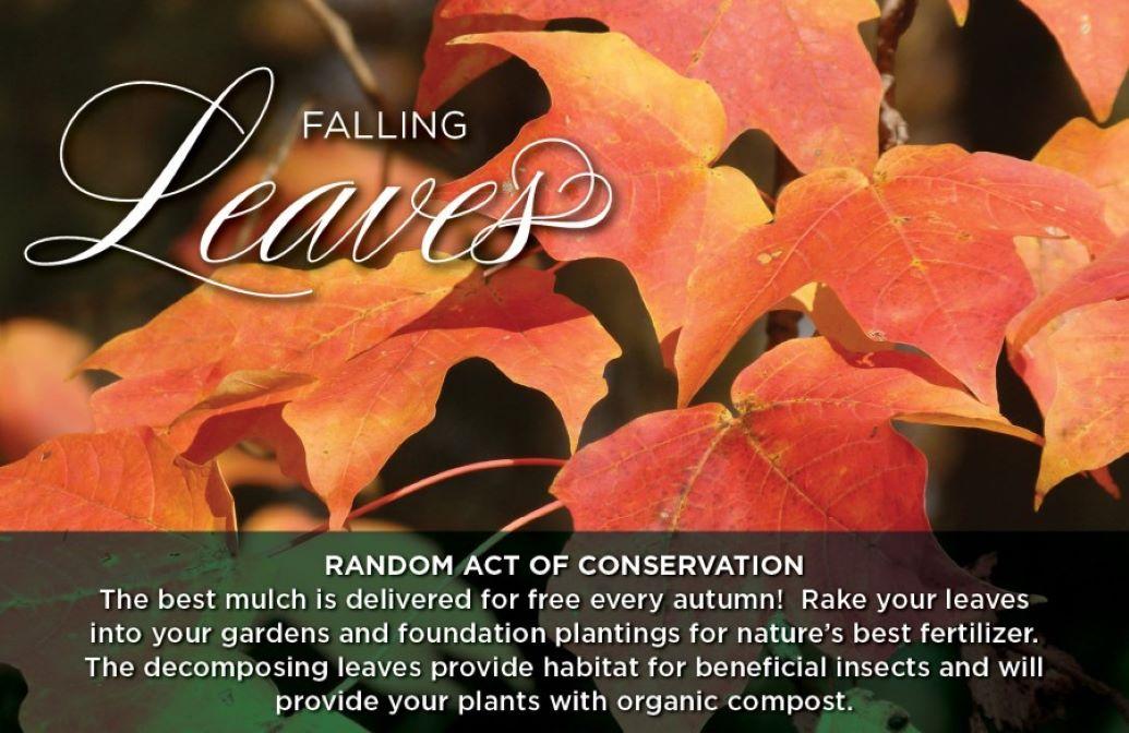 "Random Acts of Conservation ""Falling Leaves"" Banner of reddish-orange leaves"
