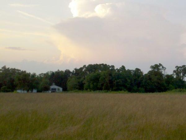 Long Branch Farm