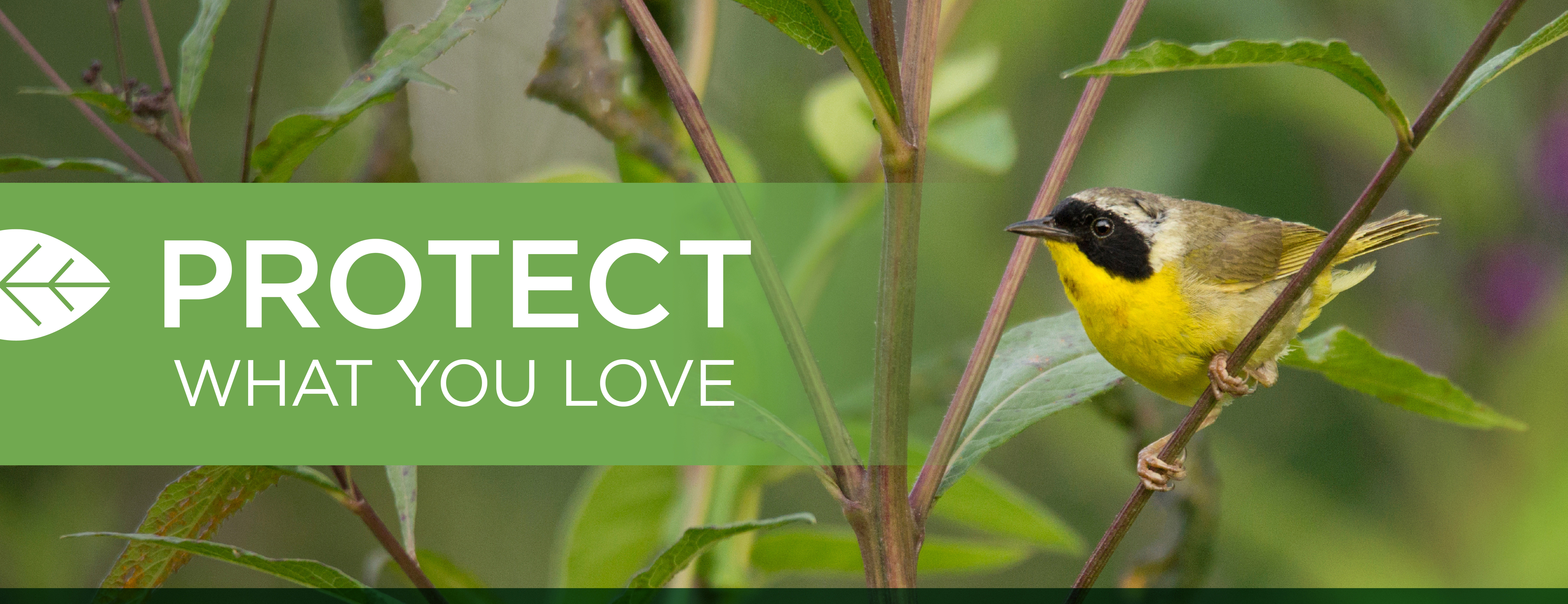 Protect What You Love logo graphic with common yellowthroat behind on tree limb