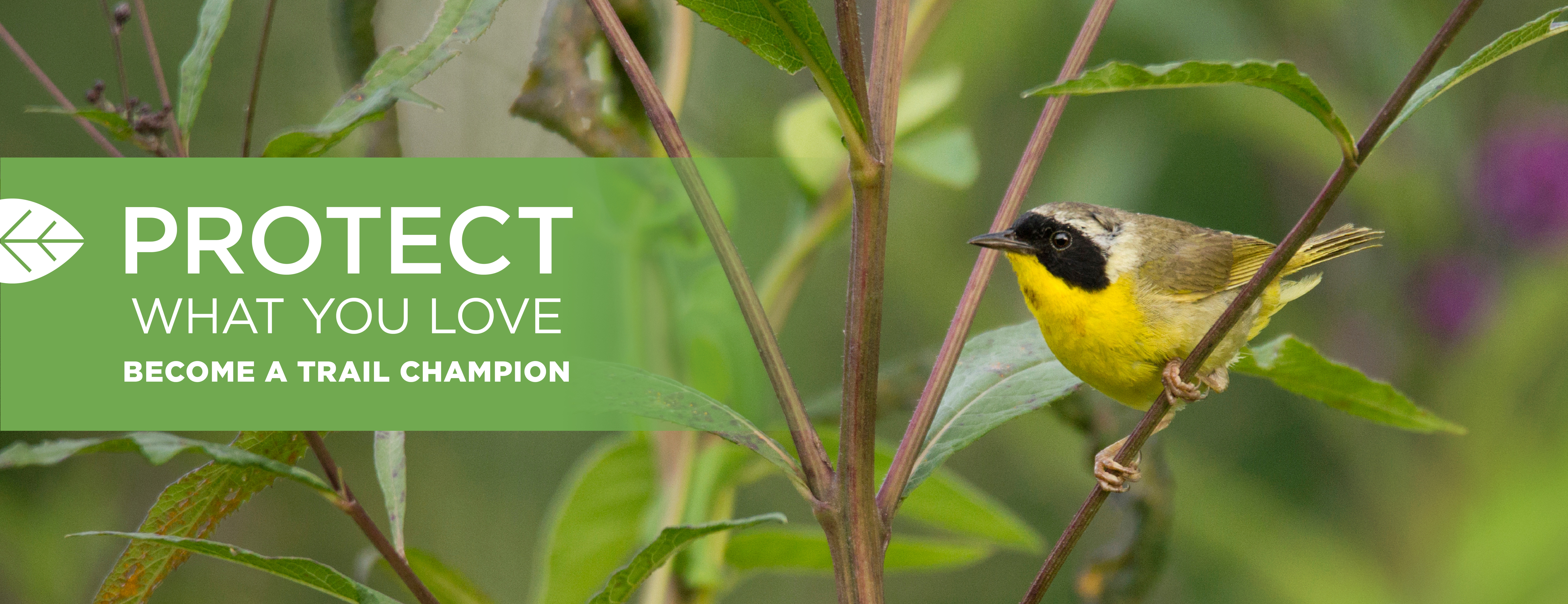 Image of a male Common Yellowthroat Warbler on a tree branch next to words that say PROTECT WHAT YOU LOVE followed by the Cincinnati Nature Center logo