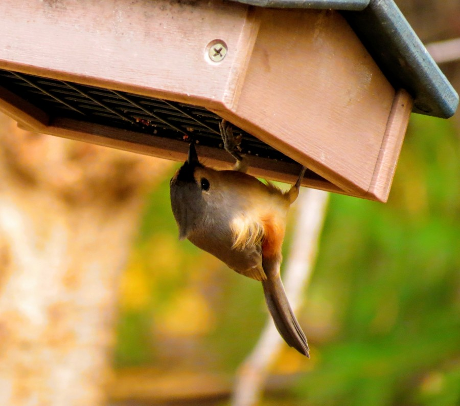 Bird eating from a feeder