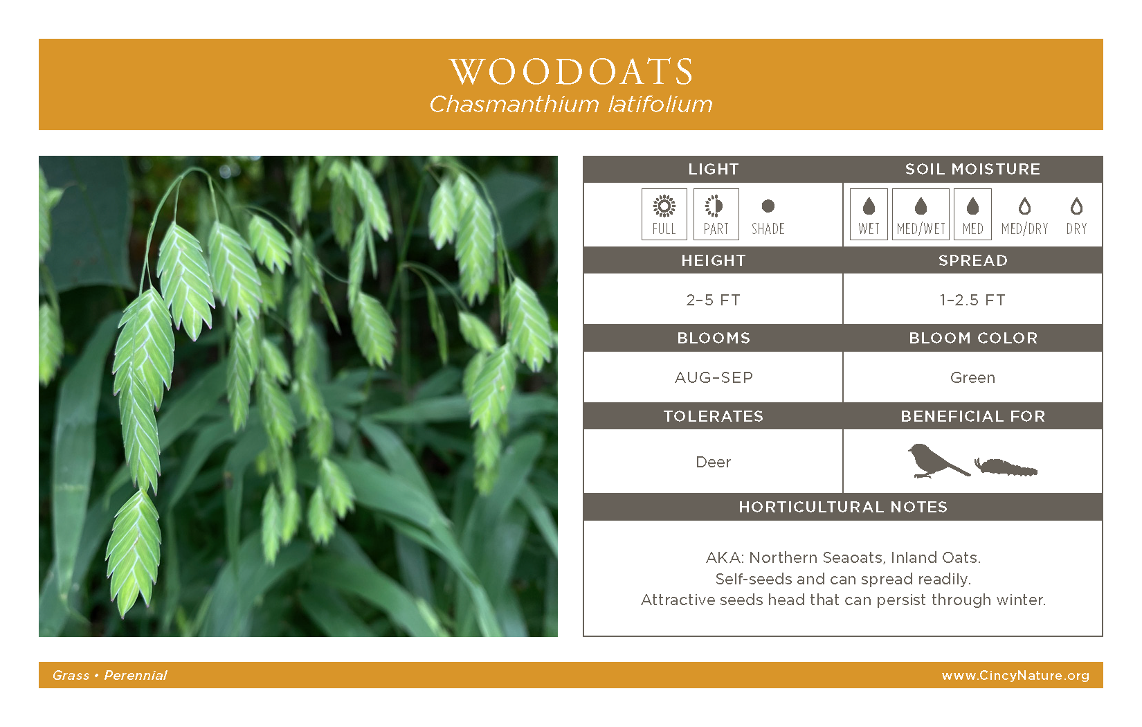 Woodoats Graphic
