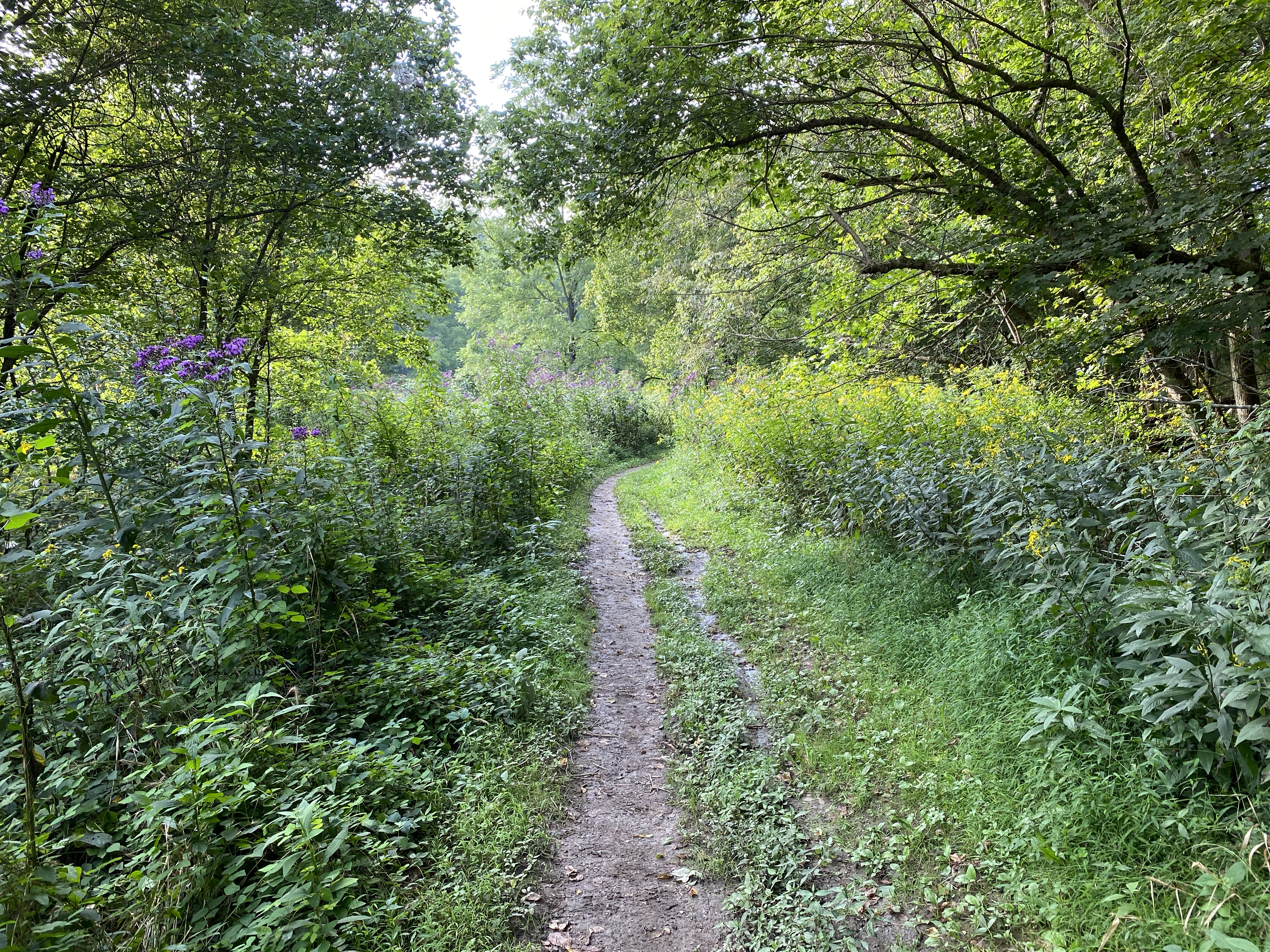 A gravel trail cuts through a grassy field with trees on either side.