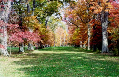A view of Oak Allee in the Fall