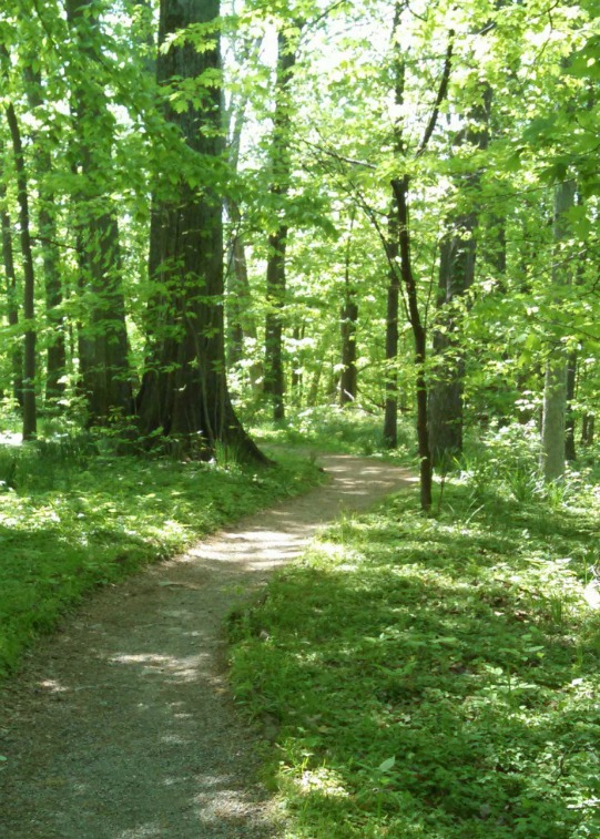 a wooded trail